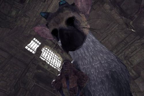 The Last Guardian's VR demo is short, heartwarming, and a perfect showcase for the medium