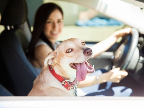 Elon Musk hints at a 'dog mode' feature for Tesla owners to safely leave their pets in their car