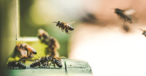 New syllabuzz: scientists taught bees to understand numbers