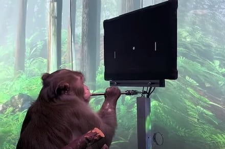 Elon Musk's Neuralink posts video of a monkey playing Pong with its mind