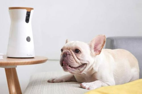 The Furbo Dog Camera Has Never Been Cheaper Than It Is Today!