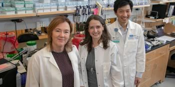 UCLA Scientists Create a Renewable Source of Cancer-Fighting T Cells
