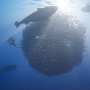 Under the Sea: A look at Beyond Blue and In Other Waters