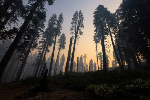 The pandemic slashed the West Coast's emissions. Wildfires already reversed it