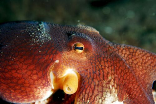 Scientists gave a bunch of octopuses ecstasy and they started acting just like humans
