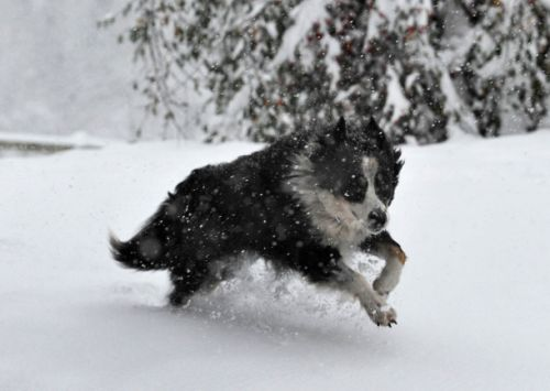 The best and easiest way to keep your dog's paws safe in cold winter weather