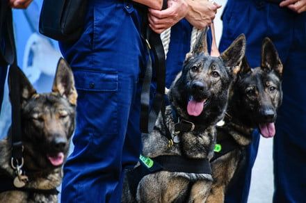 China clones Sherlock Holmes of police dogs to create pack of cunning canines