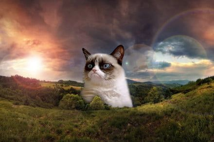 A fond farewell to Grumpy Cat, the internet's most famous feline