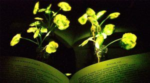 MIT Creates Glowing Plants to Replace Electric Lights