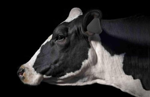 Pitching a wearable to make cattle farming more sustainable, Vence raises $2.7 million
