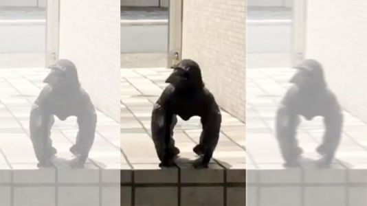 Watch: Creepy 'Gorilla Crow' Strikes a Pose in Japan, Goes Viral on Twitter