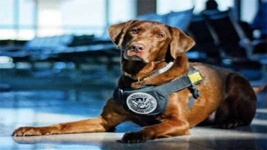 Hero Dog Goes From Drug Narc To Wildlife Conservationist