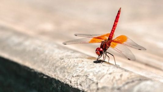 Epic Dragonfly Swarms Appear on Weather Radars in 3 States