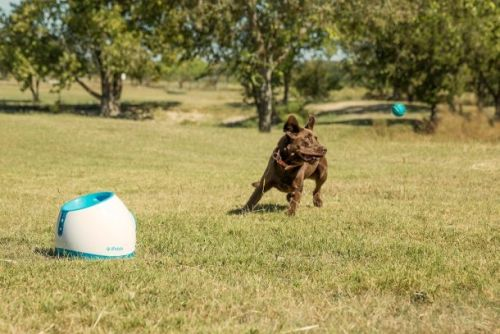 The awesome toy that lets your pup play fetch by himself is finally back in stock on Amazon