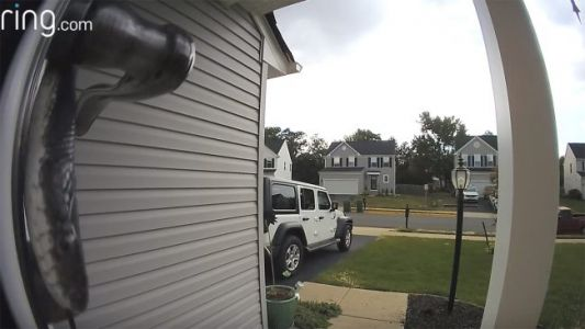 Watch: Slithering Snake Sets Off Doorbell Camera at Virginia Home