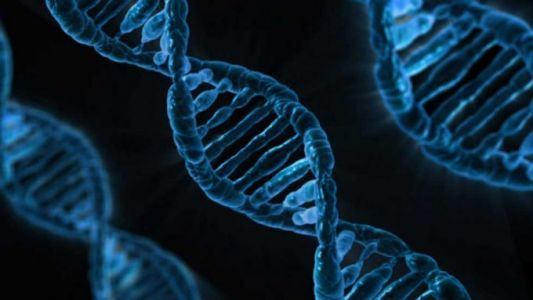 Scientists discover new DNA structure called i-motif