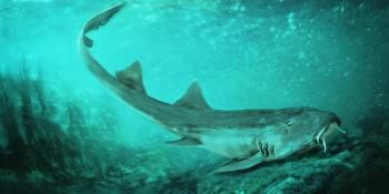 Ancient Carpet Shark Discovered With 'Spaceship-Shaped' Teeth