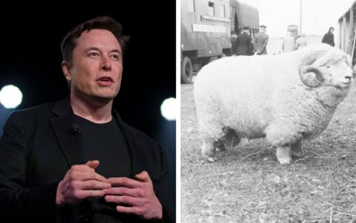 Tesla poaches social media genius behind 'absolute unit' sheep meme