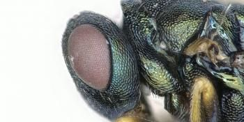 Advanced Computer Technology and Software Turn Species Identification Interactive