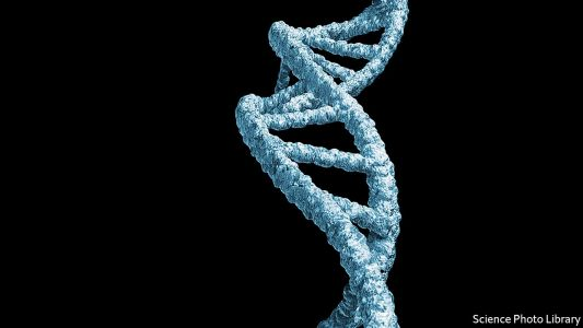A bacterium that can read man-made DNA