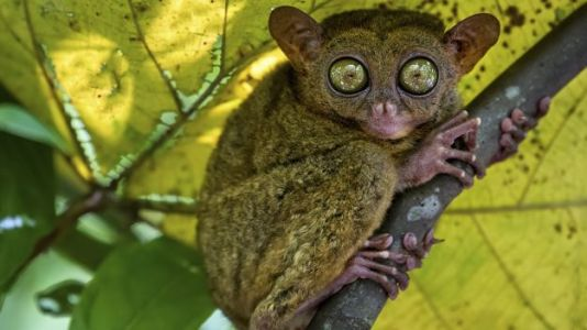 This VR Tool Lets You See the World Through the Eyes of a Tiny Tarsier