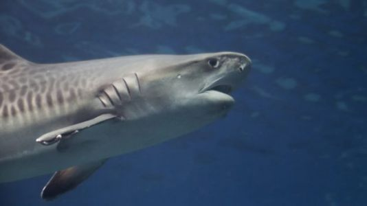 Man Dies After Apparent Shark Attack in Hawaii