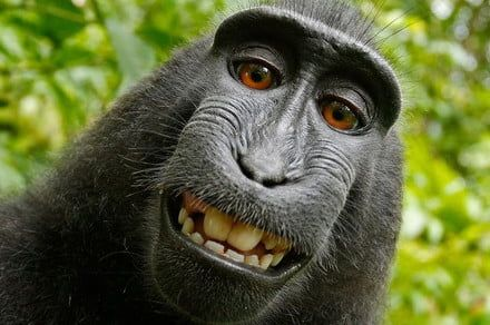 From monkey selfies to Intel allergies, here's the 7 weirdest tech lawsuits ever