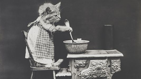 Here Are Vintage Photos of Cats Doing Human Things
