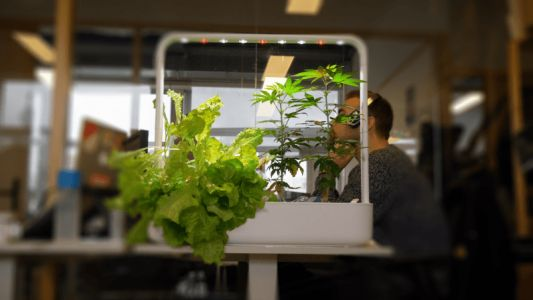 Video: We grew weed in our office with this ~high~ tech smart garden
