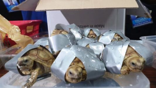 More Than 1,500 Live Turtles Worth Almost $100,000 Found in Abandoned Luggage at Manila Airport