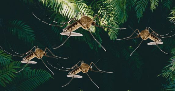 How the new mosquito emoji can create buzz to battle mosquito-borne disease