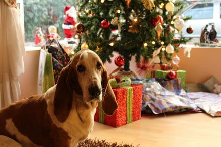 15 unique pet gift ideas to stuff in your four-legged friend's Christmas stocking