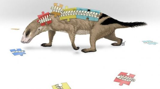 Ancient Fossils Highlight Mammalian Spine's Importance