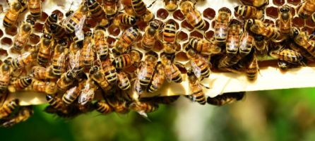 US lost 33% of bee colonies last year, and that's not a bad thing