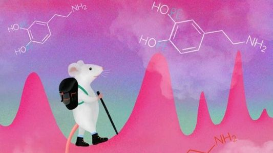 Study finds mice can learn to manipulate dopamine impulses