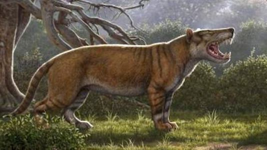Giant Prehistoric Lion Fossil Discovered in Museum Drawer