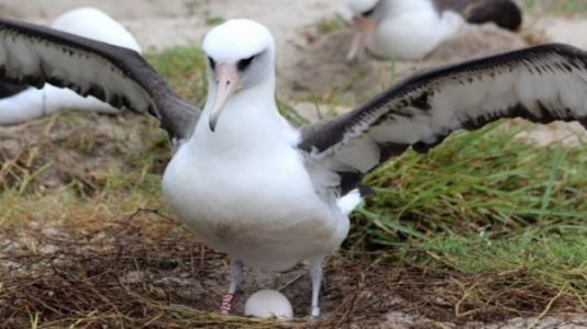 World's Oldest Wild Bird Still Has It, Lays Another Egg