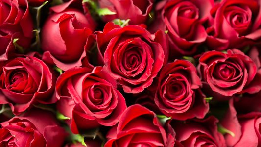 Valentine's Day flowers are still available with speedy next day delivery