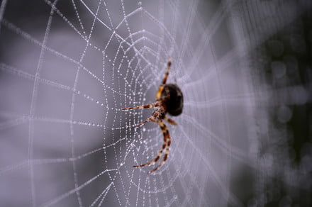 Mind-bending MIT project uses lasers to generate music from spiderwebs