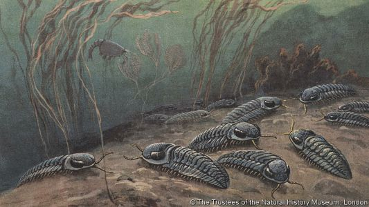The Cambrian explosion was caused by a lack of oxygen, not an abundance