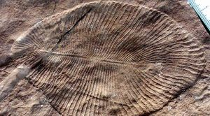 Scientist Identifies Mysterious Fossils as the Oldest Animals on Earth