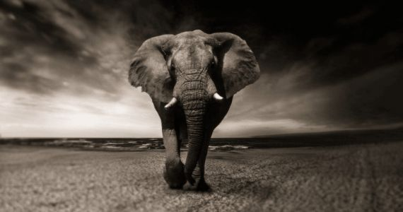 Elephant tusk DNA may hold the key to stiffer penalties for poachers