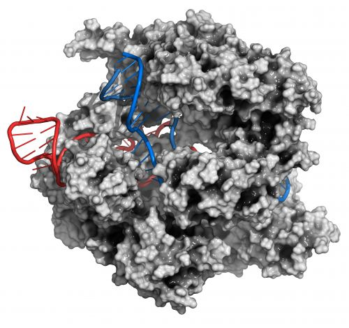 Scientists have moved one step closer to RNA editing, which could be the next stage of CRISPR