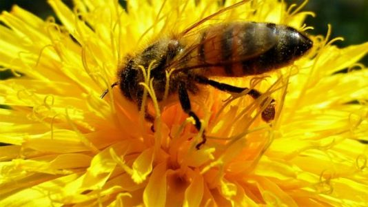 Walmart Patents Robo-Bees to Help Pollinate Crops