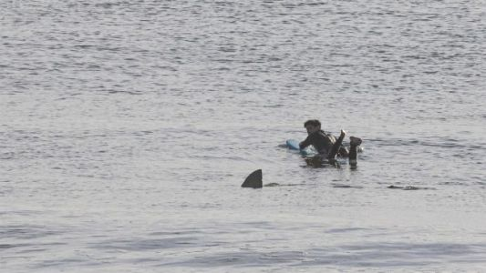 Chilling Photo Shows Surfer's Close Call With Great White Shark in Massachusetts