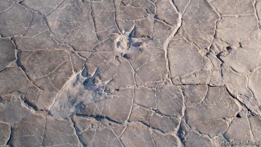 Fossil tracks in the Alps help explain dinosaur evolution