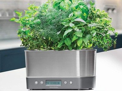 Cultivate countertop crops with the $90 AeroGarden Harvest Elite