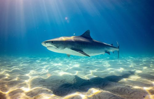 COVID-19 Vaccines May Require Killing Around 500,000 Sharks, Experts Warn