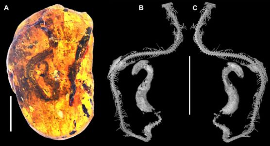 Scientists find 99-million-year-old snake trapped in an amber tomb