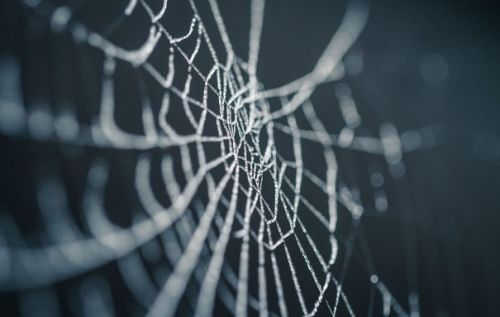 Massive 1,000ft spider web appeared overnight in Greece